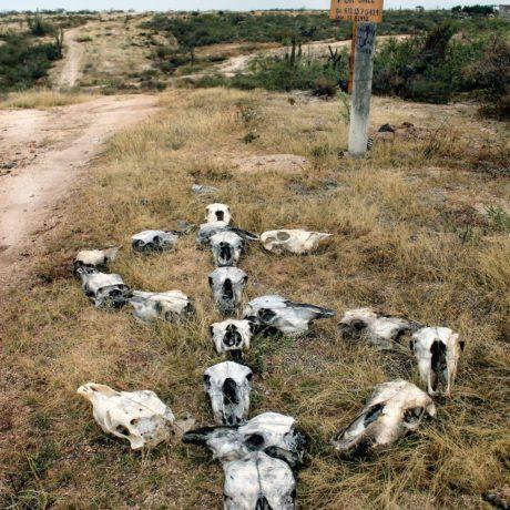 Schon Alejandro Fournier, Skull, 2009, Photograph, 130 X 90 Cm, Courtesy ...