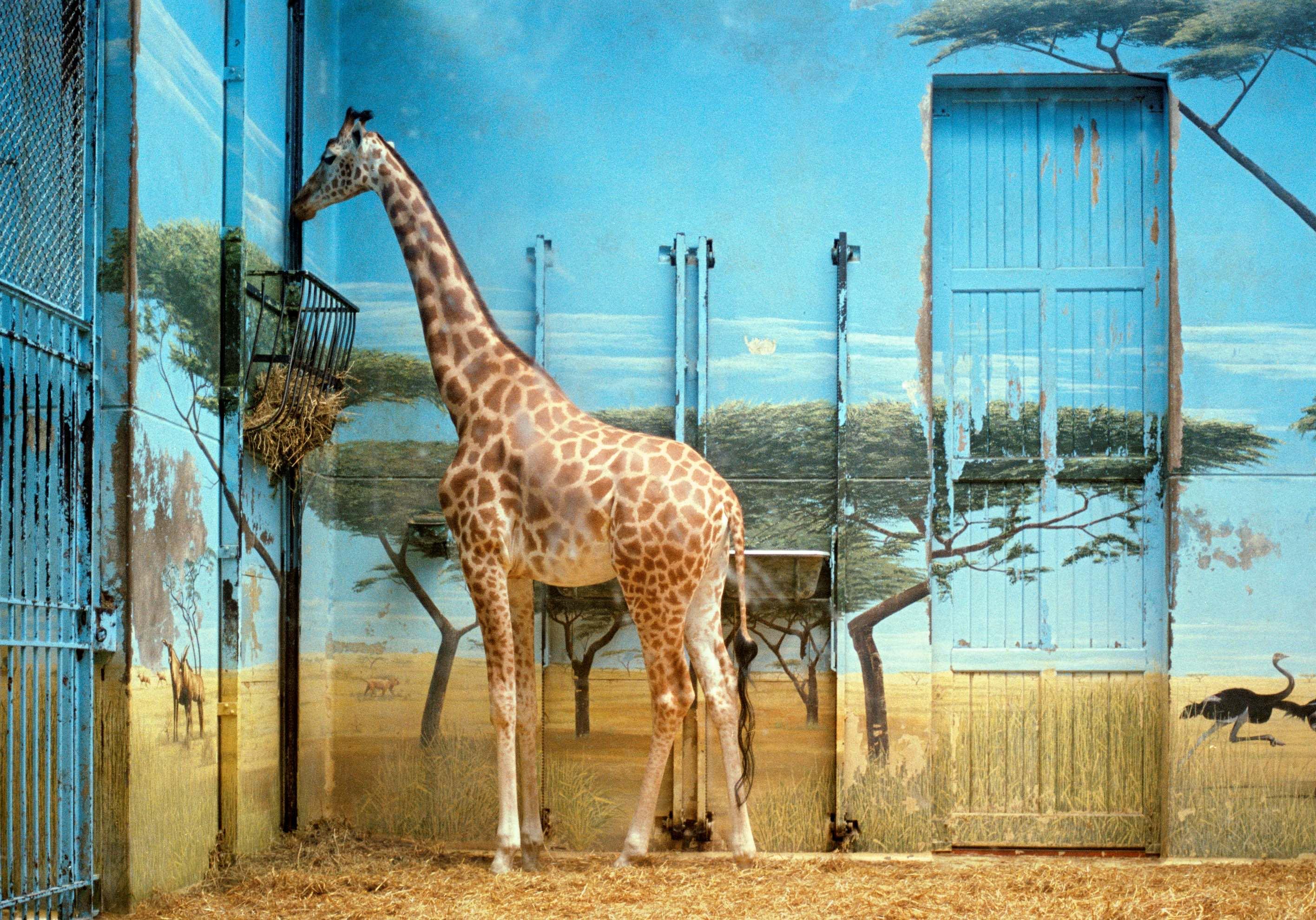 Candida Hofer, Zoologischer Garten Paris II 1997