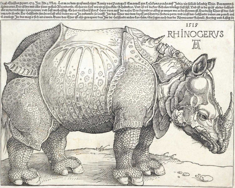 Albrecht Dürer, Rhinocerus (Rhinoceros), 1515, woodcut print