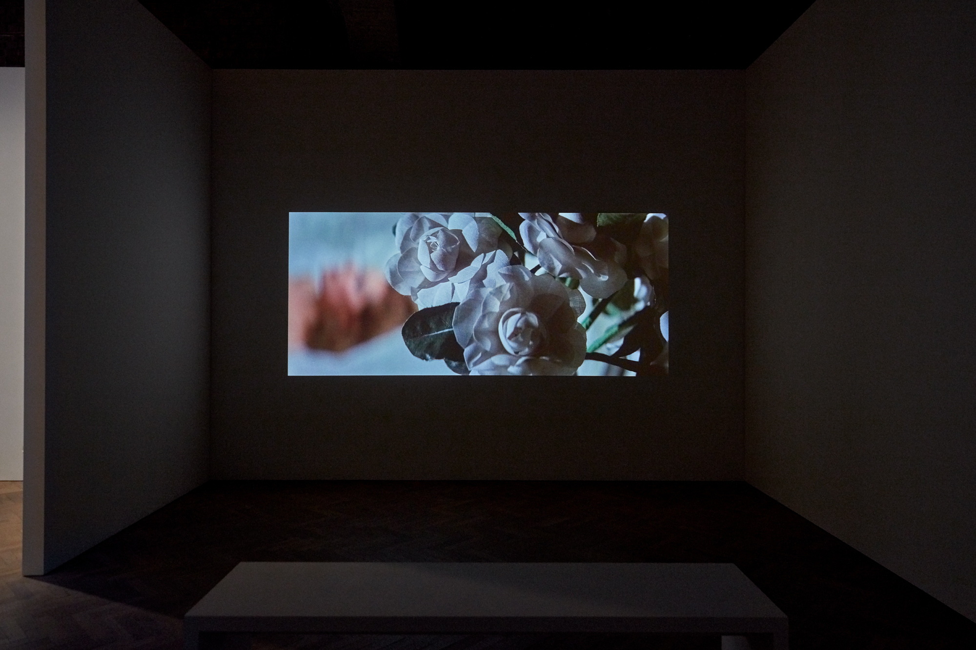 Amie Siegel, Genealogies, installation shot, Thomas Dane Gallery