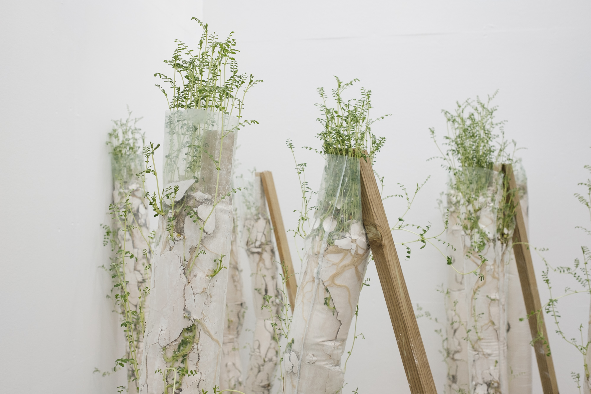 Ramona Zoladek's winning installation in the Elephant x Griffin Art Prize 2018