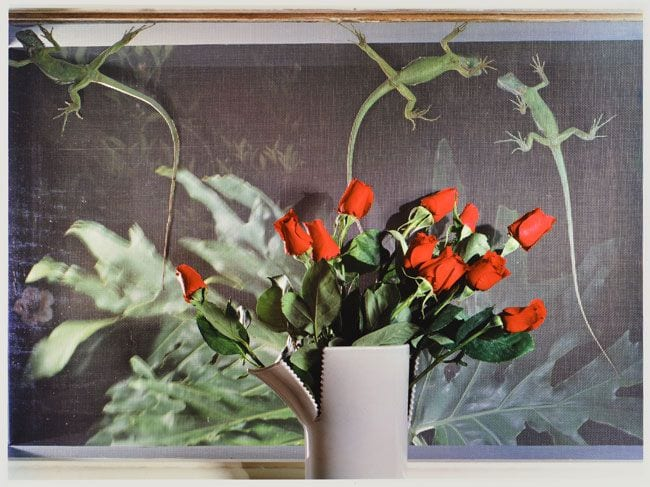 Jo Ann Callis, Lizards and Roses, 1980