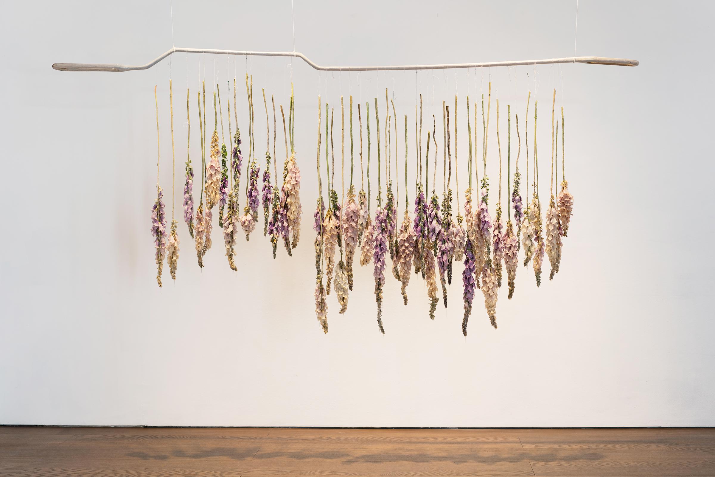 Miriam Austin, Solanum at Flowers Gallery, 2017. Installation view