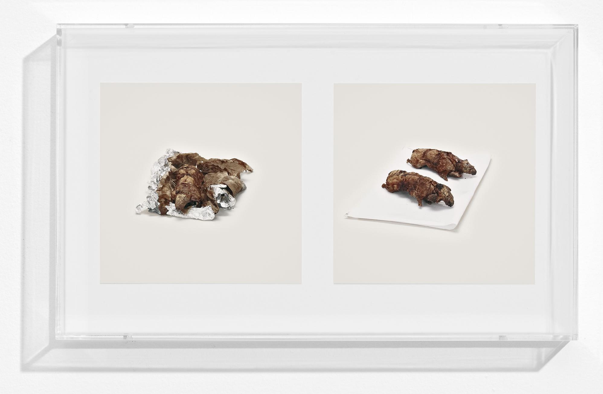 GUINEA PIGS (PROHIBITED), 2010