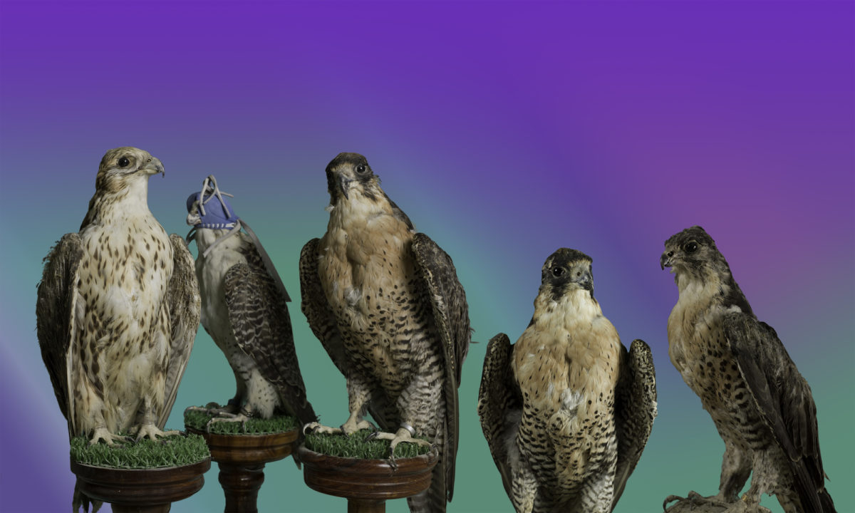 Birds of Paradise, 2015