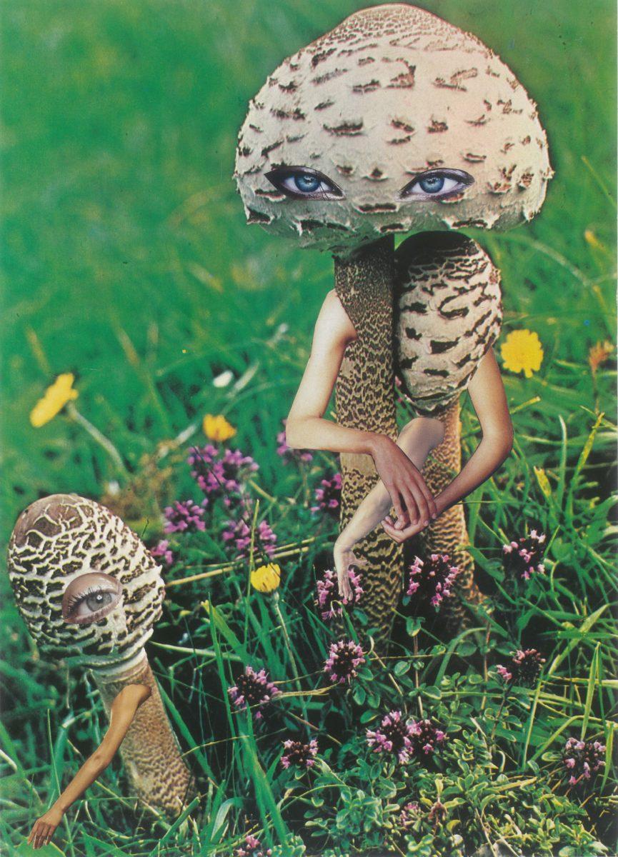 mushroom and child (c) Seana Gavin