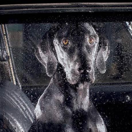 Martin Usborne, The Silence Of Dogs In Cars, cover