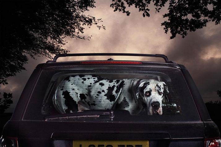 2-Martin-Usborne-The-Silence-Of-Dogs-In-Cars-yatzer
