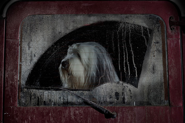 21-Martin-Usborne-The-Silence-Of-Dogs-In-Cars-yatzer