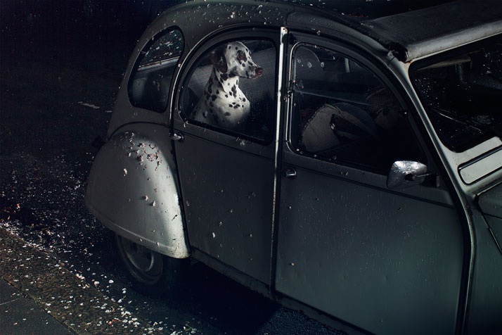 Martin Usborne, The Silence Of Dogs In Cars