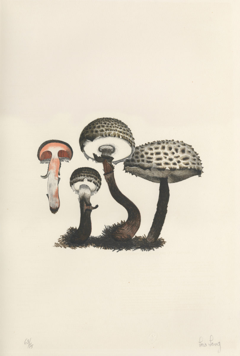 AtelierEditions_JohnCageAMycologycalForay_9781733622004_Cage_MushroomBook_Scan_PlateII_LoisLong