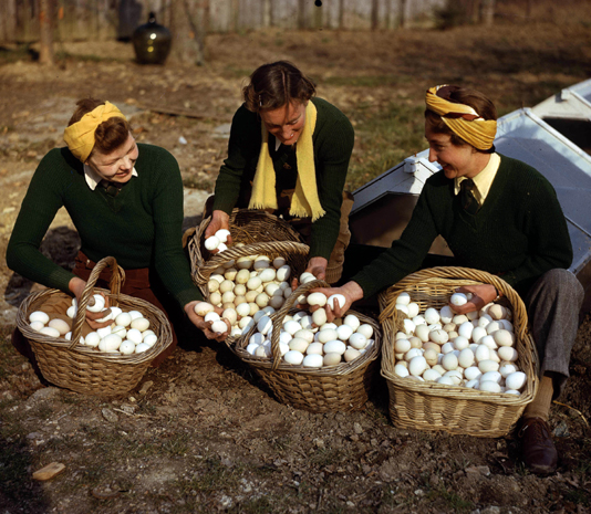 World War Two, England, March, 1944, Land army girls with a large basket of freshly laid eggs as they breed chicks at redlands poultry farm at South Holmwood in Surrey